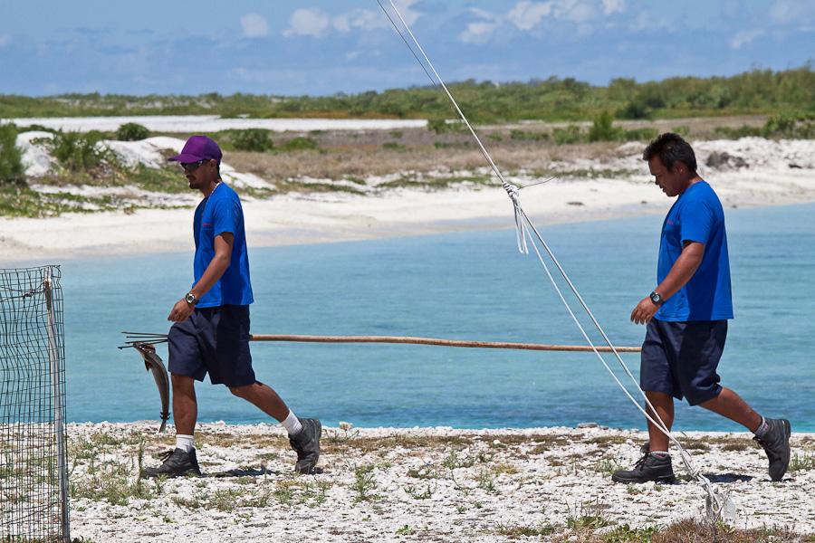 Служащие аэропорта Мангарева, архипелаг Гамбье, Французская Полинезия, поймали рыбу
