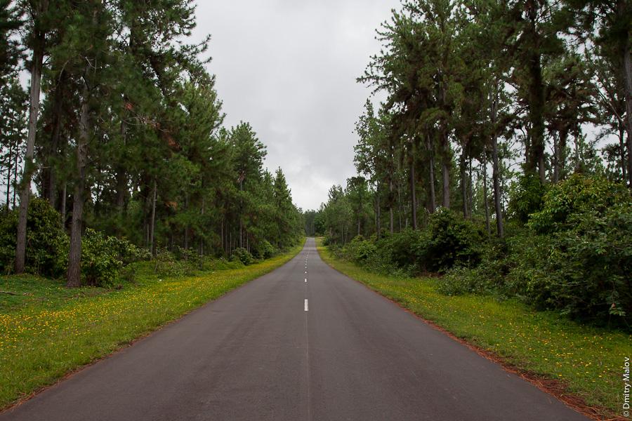 Остров Хива-Оа, Французская Полинезия, дорога через лес. Hiva Oa island, French Polynesia, a road through a forest