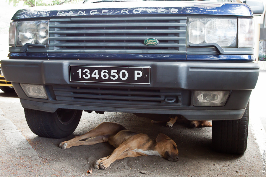 Dogs sleeping on street of Papeete, under Range Rover Land Rover, 134650P, Tahiti, French Polynesia. Собаки спят под Рэйндж Ровером (Лэнд Ровером) на улице в городе Папеэте, Таити, Французская Полинезия.