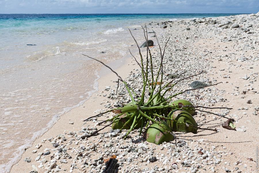 Маршалловы острова, внешние острова атолла Маджуро, моту, лагуна, океан, кокосы, пляж из белого песка. Marshall Islands, Majuro Atoll outer islands, motu, lagoon, ocean, sandy white beach, cocos