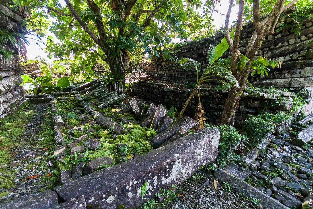 Внутри Нан-Мадола: центральная часть Нан-Дувас. Стены, заросшие деревьями рвы и мостовая, остров Понпеи, Микронезия, Океания. Inside Nan Madol central Nandauwas part: walls, pavement and moats made of large basalt slabs, overgrown ruins in the jungle, Pohnpei, Micronesia, Oceania