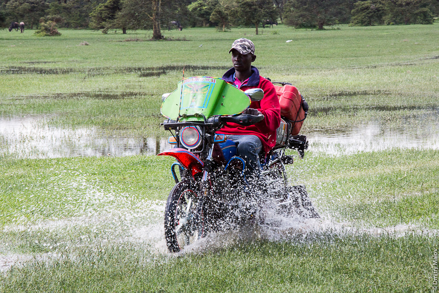 Озеро Наиваша, Кения, Африка: местный житель на мотоцикле едет по заливному лугу. Lake Naivasha, Kenya, Africa: a local native guy on a bike