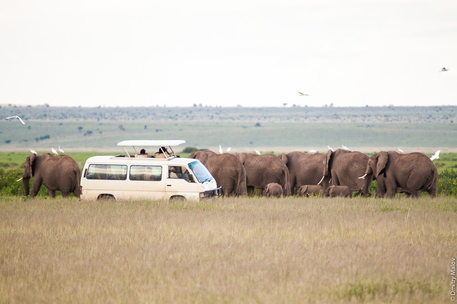 Typical safari in Kenya, Africa: elephants. Типичное сафари в Кении, Африка: слоны.