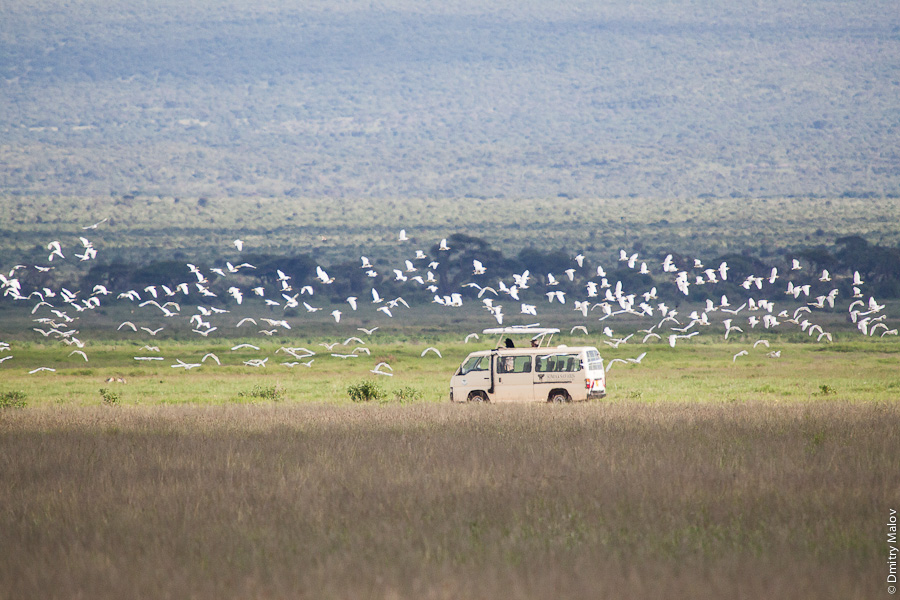 Typical safari in Kenya, Africa: birds watching. Типичное сафари в Кении, Африка: птицы.