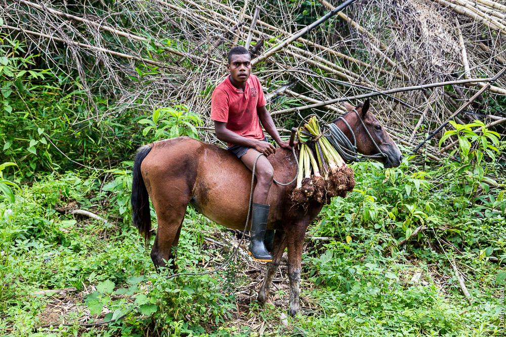 Вануа леву