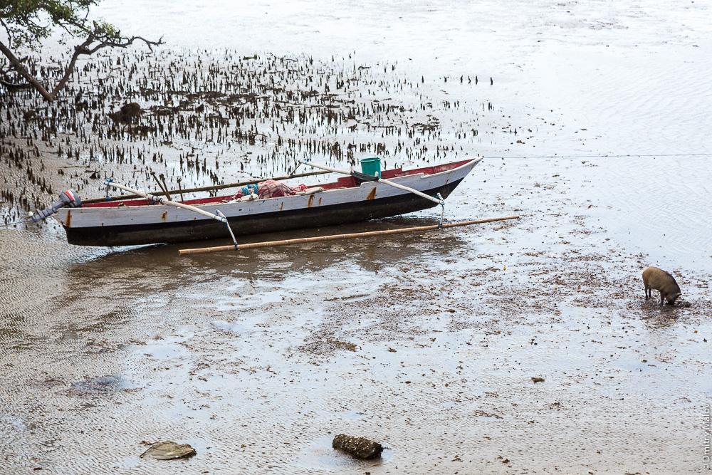 Восточный Тимор, океан, море, природа, дерево, пляж с песком, тина, свиньи, каное с балансиром. East Timor, Timor-Leste, ocean, sea, sand beach, outrigger canoe, tree, pigs