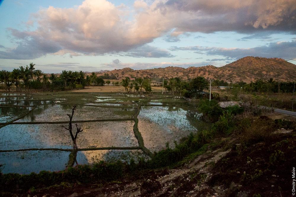 Восточный Тимор, выращивание риса, делянки. East Timor, Timor-Leste, rice farming, rice plot