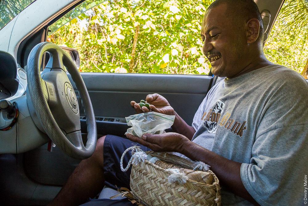 Потребление бетеля, остров Яп, Микронезия: берут орехи пальм арека катеху
