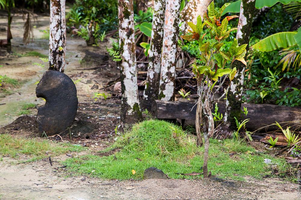Half of Stone coin rai in the jungle, Yap Island, Caroline Islands, Federated States of Micronesia. Половина каменной монеты раи в джунглях, остров Яп, Каролинские острова, Федеративные штаты Микронезии.