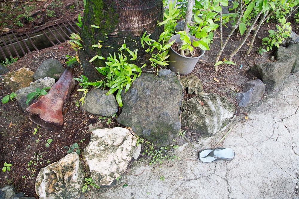 Граница из ракушек на тротуаре, Палау. Border made of shells on the sidewalk, Palau.