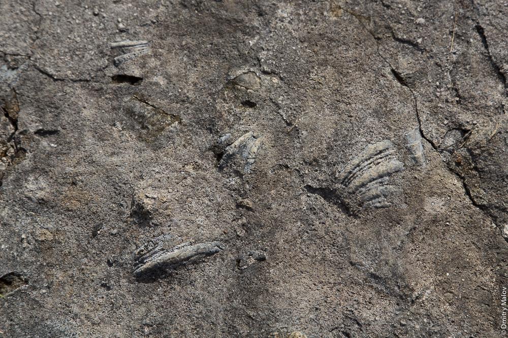 Тактильная поверхность из ракушек на тротуаре, Палау. Tactile surface of shells on the sidewalk, Palau.