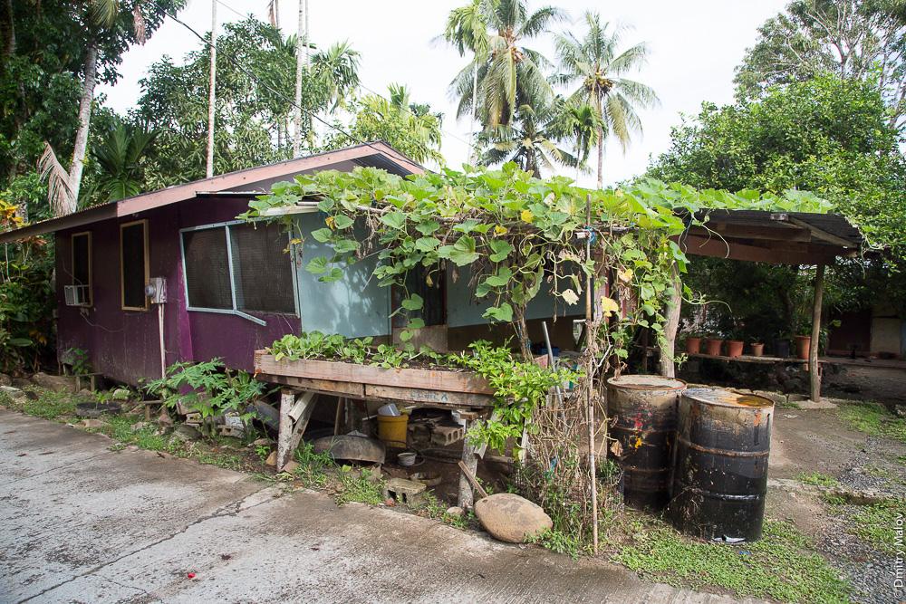 Приподнятый огород в горшках. Палау. A raised vegetable garden in pots. Palau.