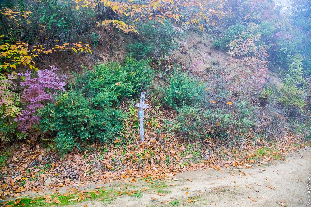 Осенний лес на Святой Горе Афон и указатели на тропе