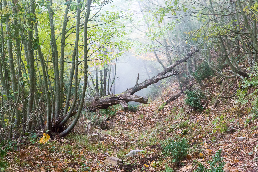 Лесная тропа на Святой Горе Афон
