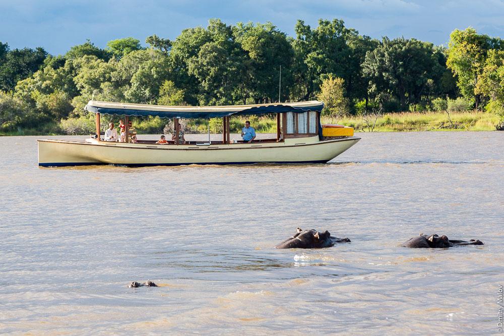 Hippos and a tourist boat. Zambezi river cruise near Victoria Falls, Zambia, Zimbabwe. Круиз по Замбези около водопада Виктория, Замбия, Зимбабве. Бегемоты и лодка с туристами