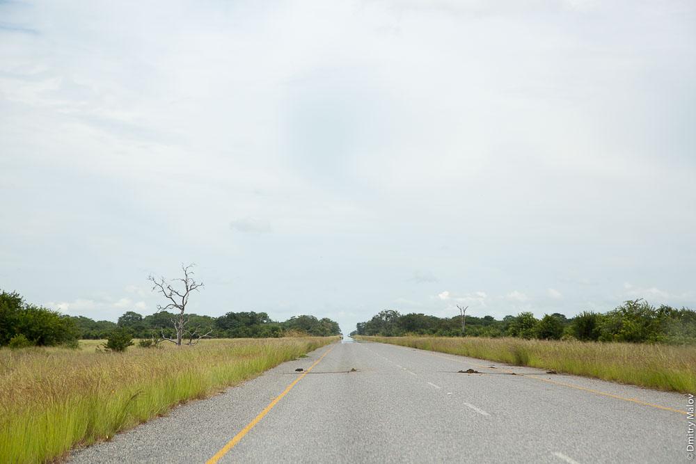 Road through Chobe national park, Botswana. Дорога через национальный парк Чобе, Ботсвана