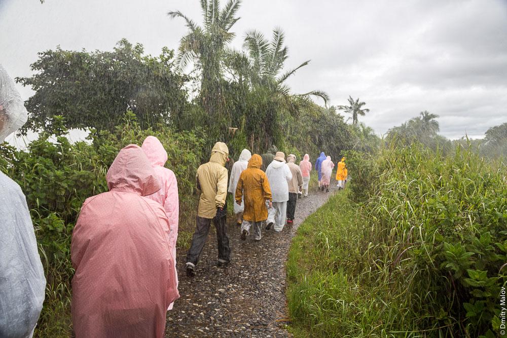 Дождевой лес, японские туристы, Водопад Виктория, Замбези, Замбия, Зимбабве. Victoria Falls, Zambezi, Zambia, Zimbabwe, rainforest, japanese tourists