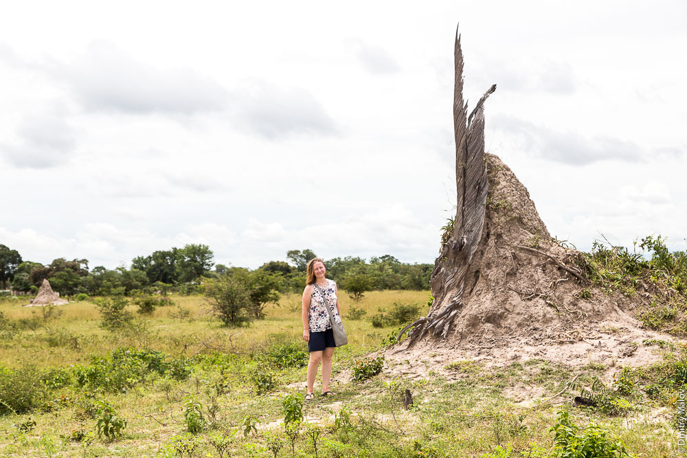 Termite mound, ant-hill near the town of Katima Mulilo, Caprivi strip, Namibia, Africa. Термитник (муравейник), полоса Каприви, Катима-Мулило, Намибия, Африка