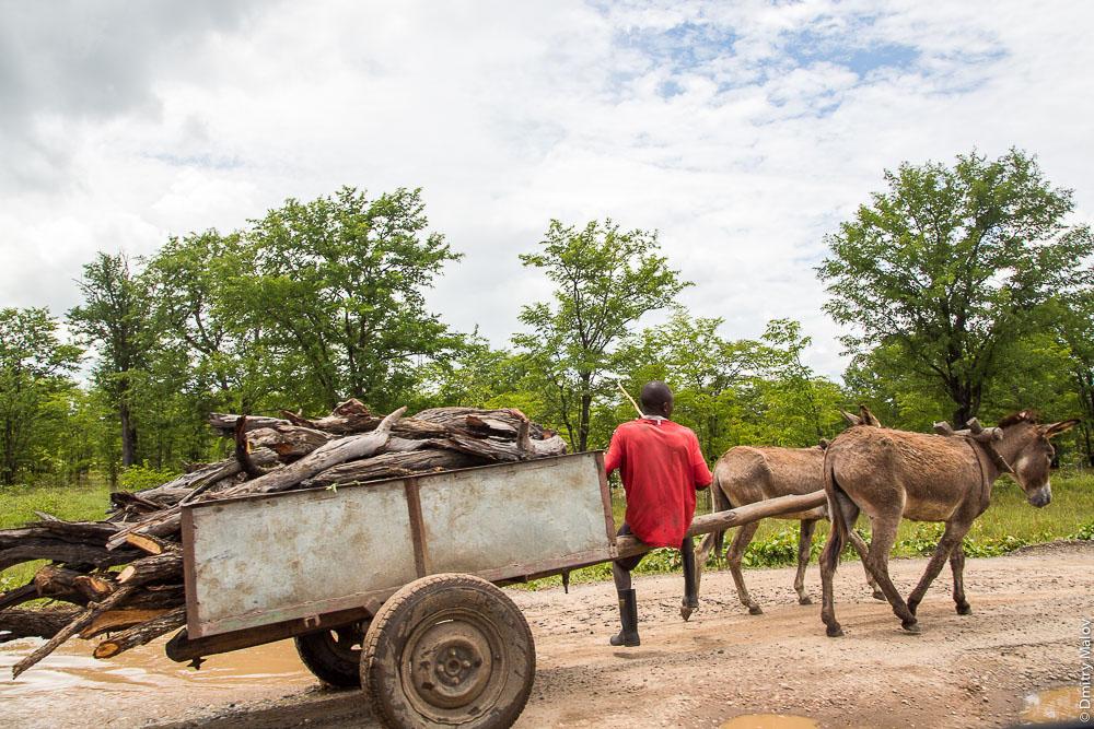 Black african lozi guy on a donkey cart full of wood on M10 road Zambia, Barotseland, Sesheke town - Livingstone, Africa. Трасса Сешеке-Ливингстон, Баротселенд, Замбия, Африка, черный мужчина лози едет на телеге с дровами, запряжённой ослом