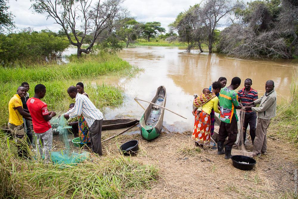 Black african lozi people fishing, boats, nets, river, M10 road Zambia, Sesheke town - Livingstone, Barotseland, Africa. Трасса Сешеке-Ливингстон, Баротселенд, Замбия, Африка. Черные африканцы племени лози ловят рыбу, рыбная ловля, лодка, сети, рыбаки