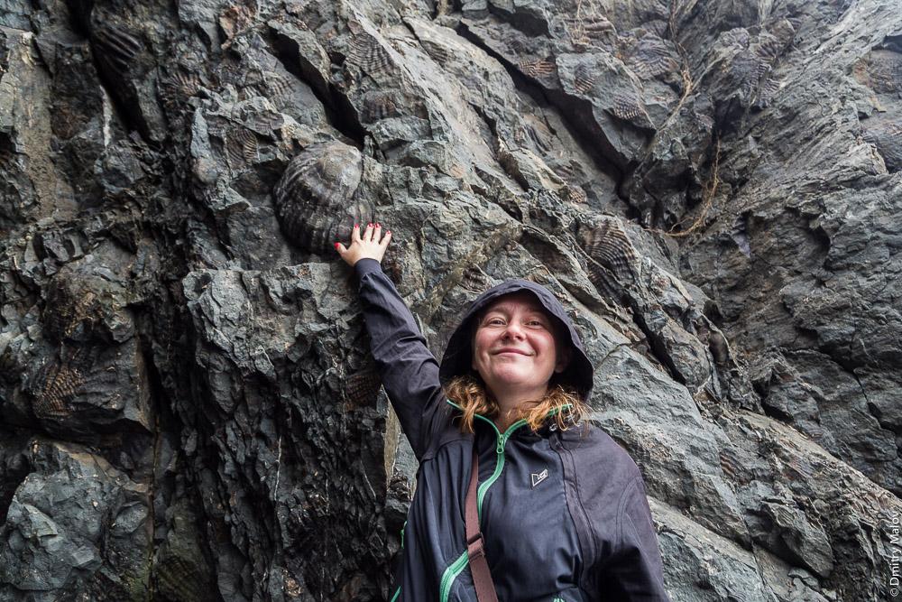 Fossils, Cape Jonquière, Alexandrovsk-Sakhalinsky, Sakhalin, Russia. Мыс Жонкиер и окаменелости, Александровск-Сахалинский.
