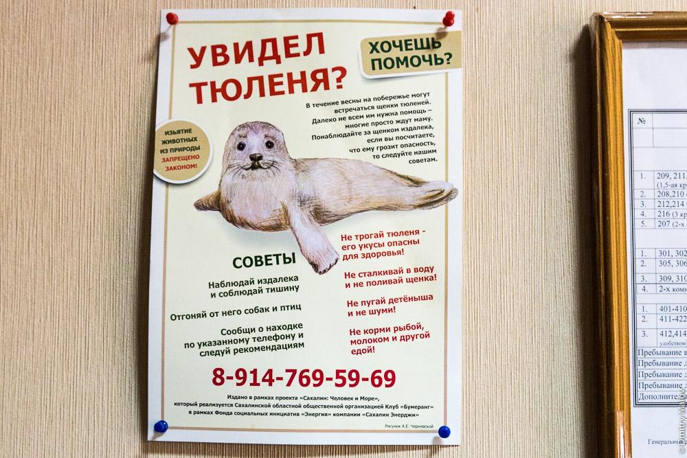 Увидел тюленя? Хочешь помочь? Сахалин. Щенки тюленей, плакат, наглядная агитация. A seal on a poster, Sakhalin, Russia.