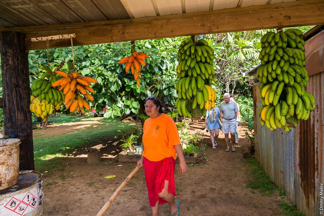 Полинезийка,  банананы. Риматара, архипелаг Острал (Тубуаи), Французская Полинезия. Rimatara, the Austral archipelago (Tubuai), French Polynesia. A Polynesian woman, bananas.