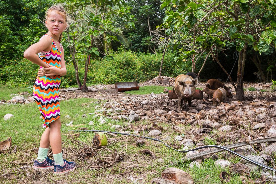Девочка и органические свиньи. Моэраи, остров Руруту, архипелаг Острал (Тубуаи), Французская Полинезия. Moerai, Rurutu, the Austral islands (Tubuai), French Polynesia. A girl and organic pigs