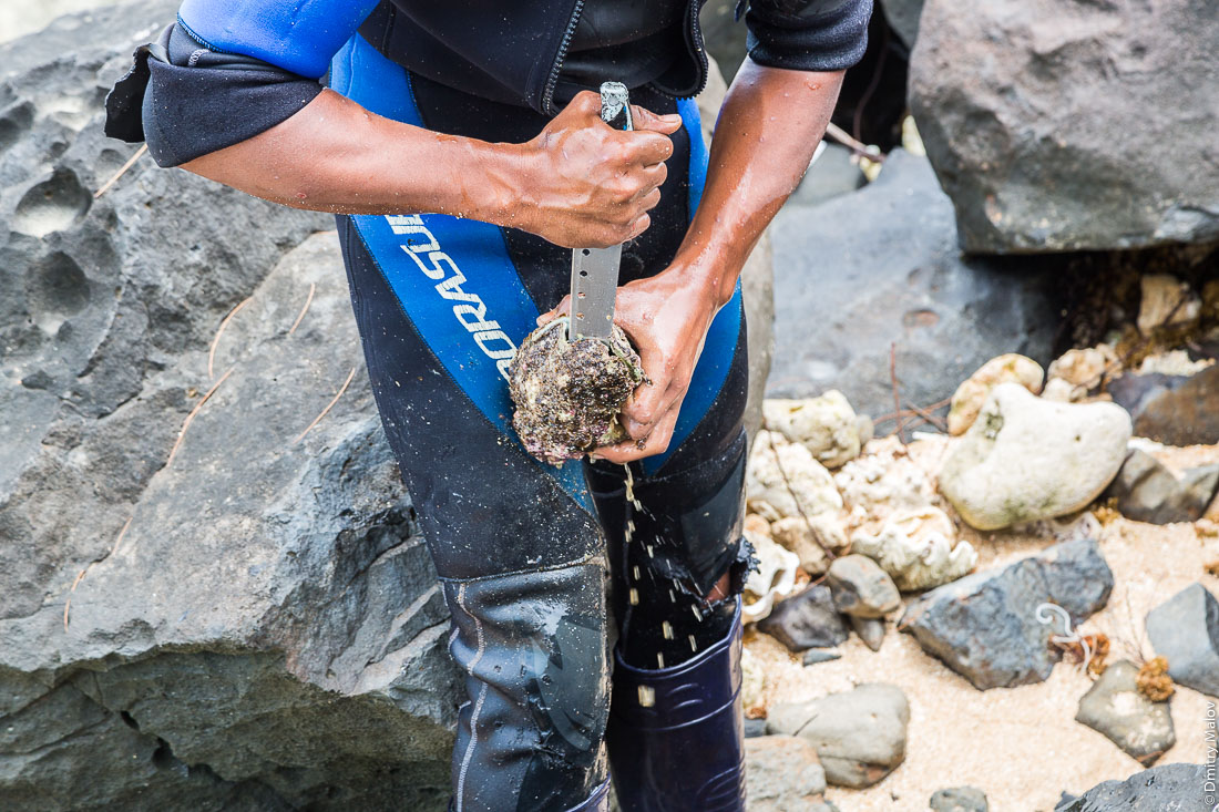 Вскрытие гигантского моллюска пауа (тридакна) ножом на пляже. Остров Тубуаи, архипелаг Острал, Французская Полинезия. Tubuai island, the Austral islands, French Polynesia. Pahua (Tridacna), the giant clam opening with a knife