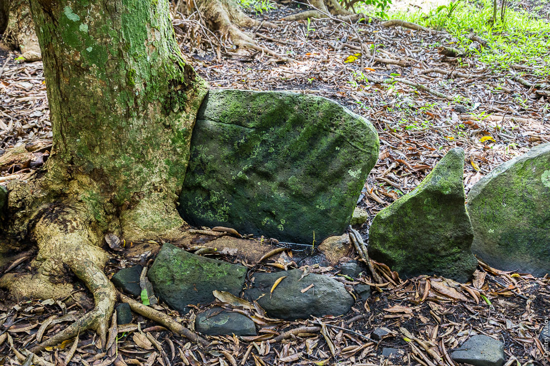 Петроглиф в форме ладони и 5 пальцев. Мараэ Тапутапуатеа, остров Тубуаи, архипелаг Острал, Французская Полинезия. Tubuai island, the Austral islands, French Polynesia. Marae Taputapuatea, Tuhaa Pae (palm, five fingers) petroglyph.