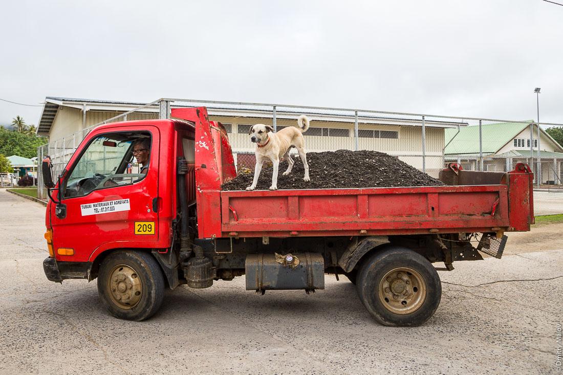 Посёлок Матаура, остров Тубуаи, архипелаг Острал, Французская Полинезия. Собака едет на гравии в кузове грузовика. Mataura village, Tubuai, the Austral islands, French Polynesia. A dog rides on the gravel in a truck