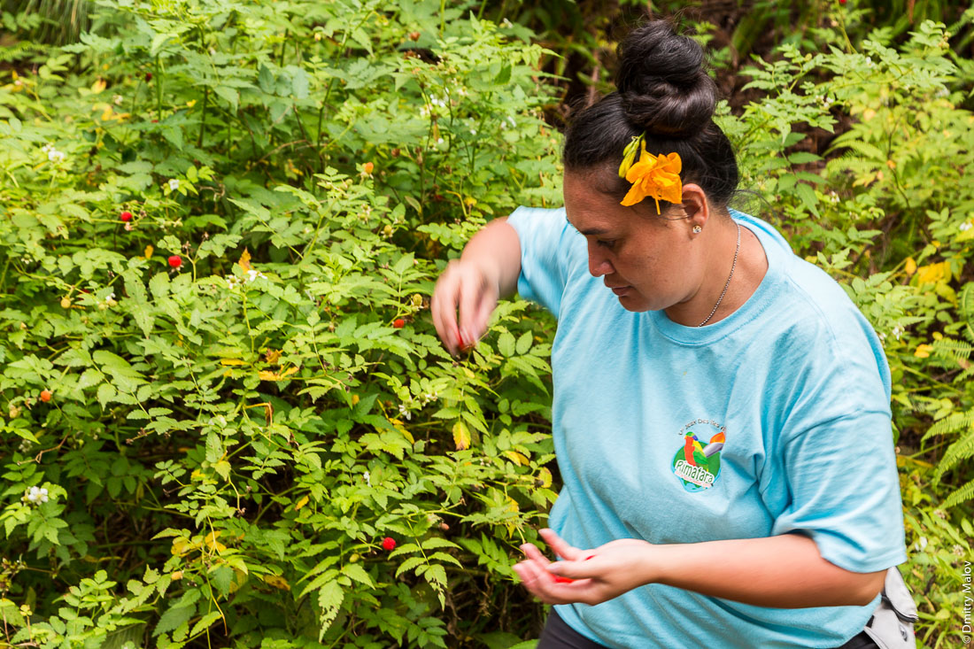 "Местная ""малина"" и полинезийская женщина, остров Рапа-Ити, острова Басс, Французская Полинезия. Local ""raspberries"" and a local Polynesian woman, Rapa-Iti, The Bass Islands, French Polynesia"