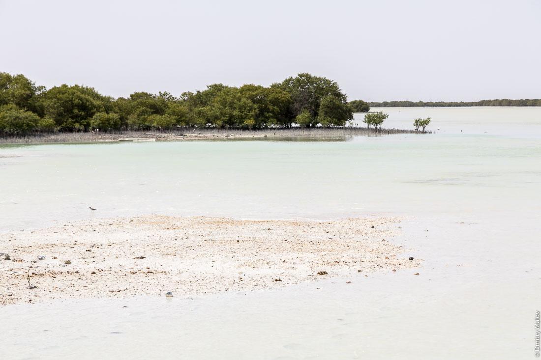 Мангровые заросли. Город Аль Дакира, Катар. Mangroves. Al Thakhira (Al Dhakira) town, Qatar.