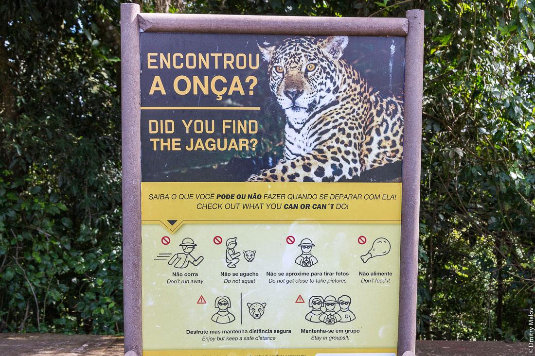 """Encontrou a onça? Did you find the jaguar? poster. Parque Nacional Iguassu, Brazil. Плакат об опасностях """"Вы повстречали ягуара?"""", Национальный парк Игуасу, Бразилия"""
