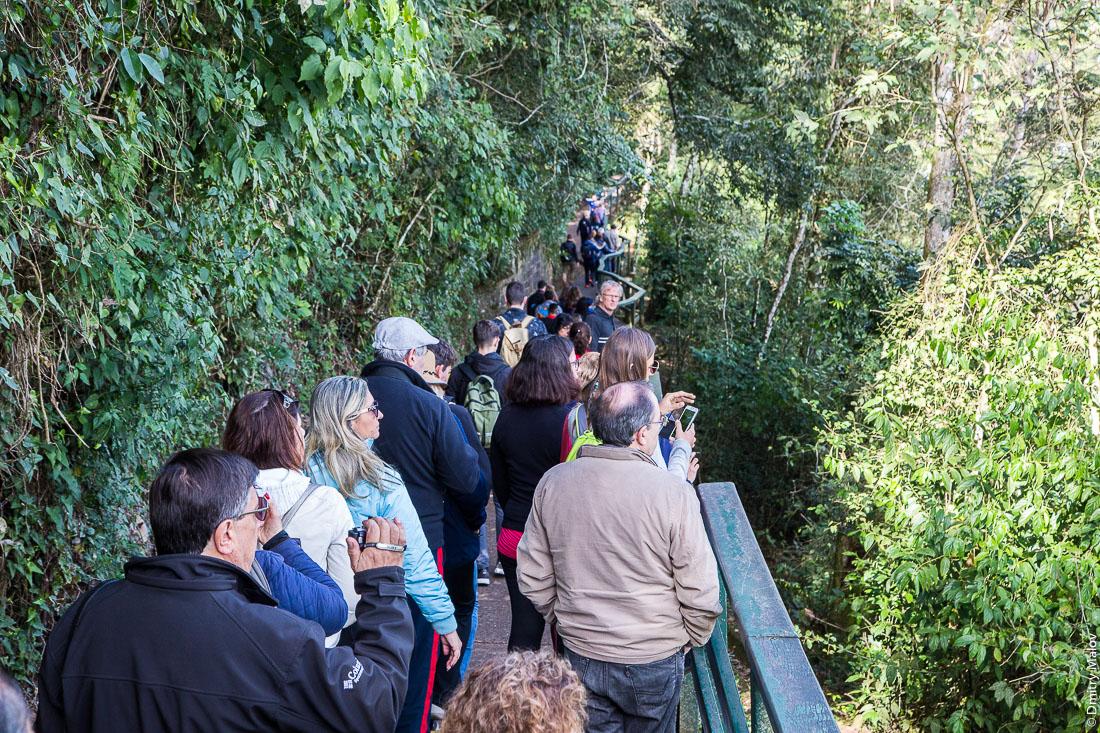 Трекинговые маршруты в джунглях, национальный парк, Водопады Игуасу, Бразилия. Brazilian jungle hiking trail - canopy boardwalk in Iguazu National Park.