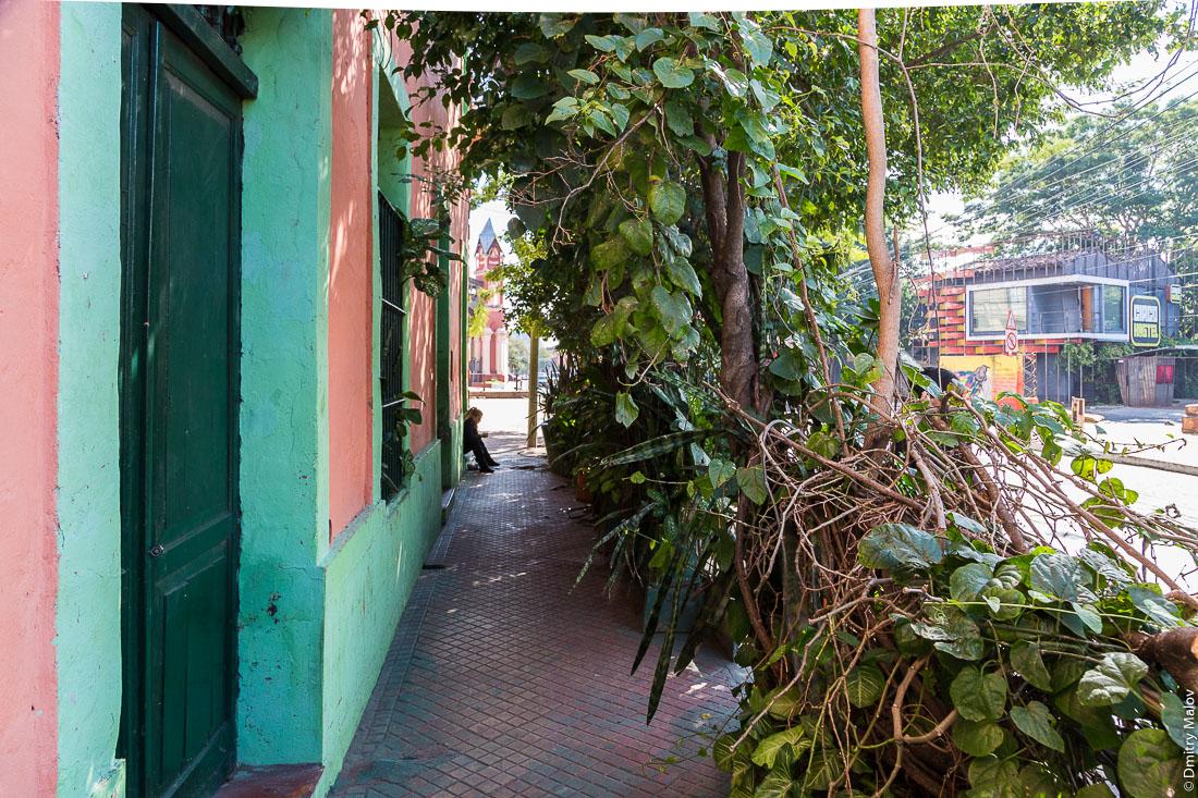 Испанский колониальный особняк оброс зеленью, центр города Асунсьон, Парагвай. Overgrown Spanish colonial mansion, the center of the city of Asuncion, Paraguay.