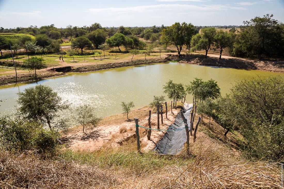 Пруд на ферме. Филадельфия, Гран-Чако, Парагвай. Farm pond. Filadelfia, Gran Chaco, Paraguay