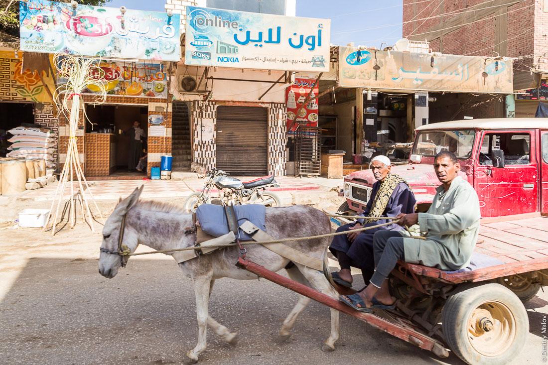 Two men on a donkey cart. El-Bawiti town, Bahariya Oasis, Western desert, Sahara, Egypt. Двое мужчин, на телеге, запряжённой ослом. Эль-Бавити, Оазис Бахария, Западная пустыня, Сахара, Египет.