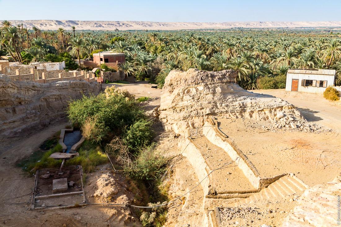 Море финиковых пальм, Эль-Бавити, Оазис Бахария, Западная пустыня, Сахара, Египет. Sea of date palms, El Bawiti, Oasis of Bahariya, Western Desert, Sahara, Egypt.
