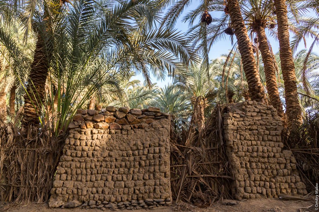 Стена постройки из сырого глиняного кирпича и финиковые пальмы, Эль-Бавити, Оазис Бахария, Западная пустыня, Сахара, Египет. Adoby clay brick walls and date palms, El Bawiti, Bahariya oasis, Western Desert, Sahara, Egypt.