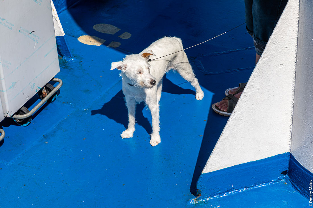 Good dog on board of Ichnusa BluNavy ferry from Corsica to Sardinia