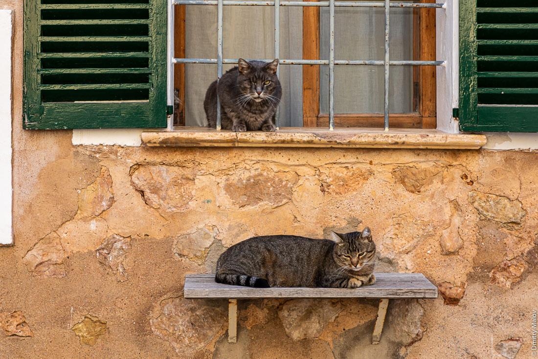 Полочки для котиков. Fornalutx. Майорка, Испания.