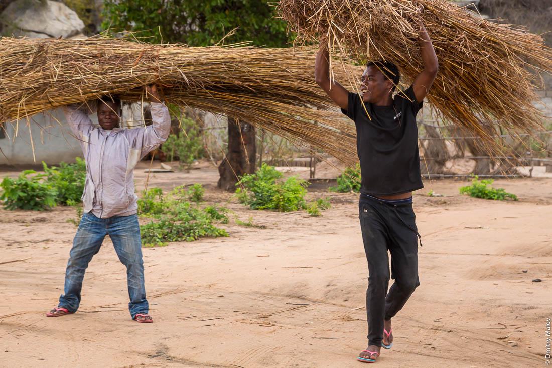 Чёрные мужчины, африканцы, несут сено. Дорога Нампула - остров Мозамбик, Мозамбик, Африка