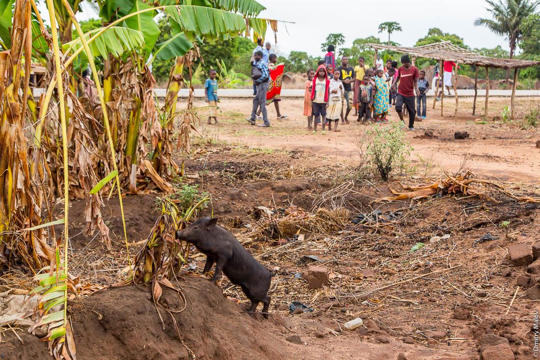 На поросёнка собралась посмотреть вся деревня. Шоссе Нампула - остров Мозамбик, Мозамбик, Африка